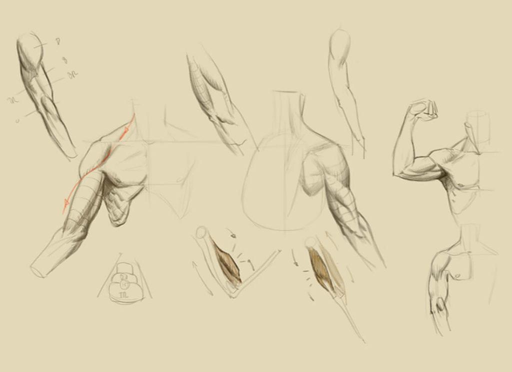 Dibujo, estudio de músculos del brazo. Diego Catalán, profesor de dibujo y pintura realista