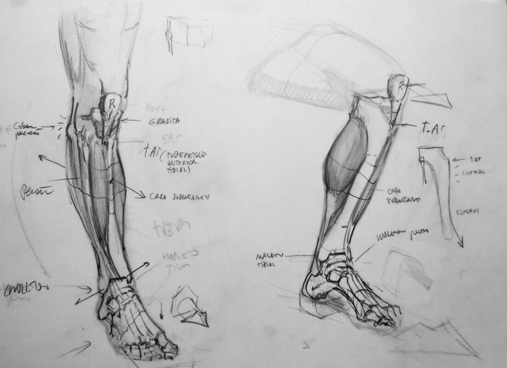 Dibujo, estudio de estructura y músculos de la pierna. Diego Catalán, profesor de dibujo y pintura realista