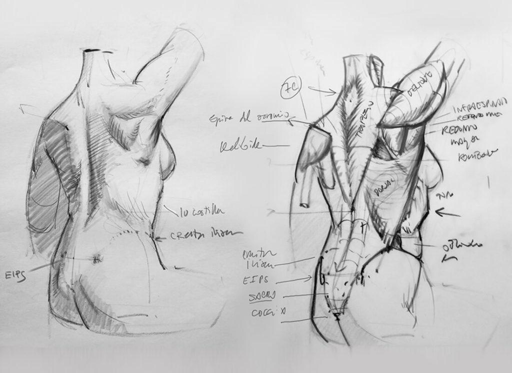 Dibujo de torso, músculos y puntos sub cutáneos. Diego Catalán, profesor de dibujo y pintura realista