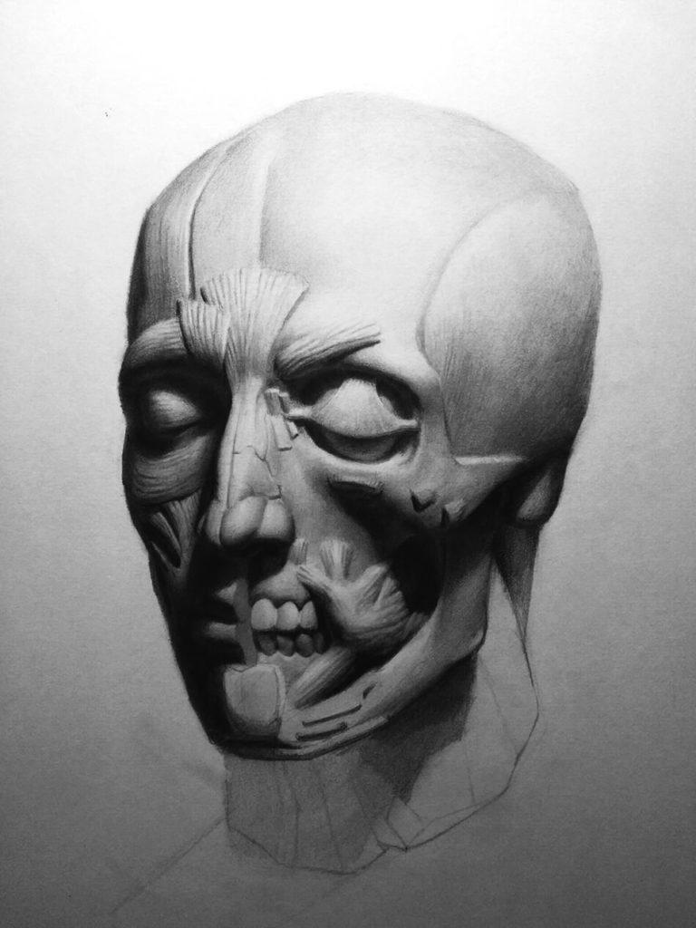Dibujo Lapiz cabeza anatomia musculos huesos | Diego Catalan Amilivia